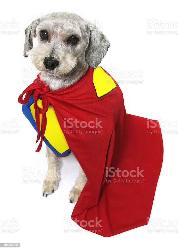 Super Dog Costume stock photo