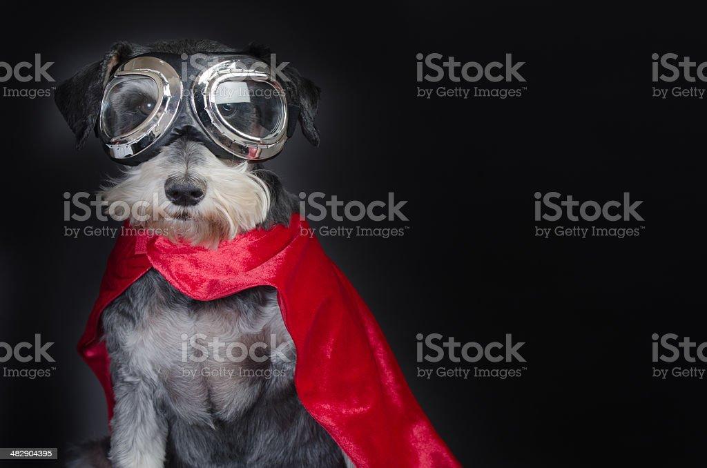 Super Dog stock photo