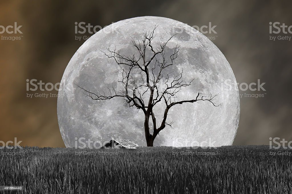 Super moon and barren tree with hut in night stock photo