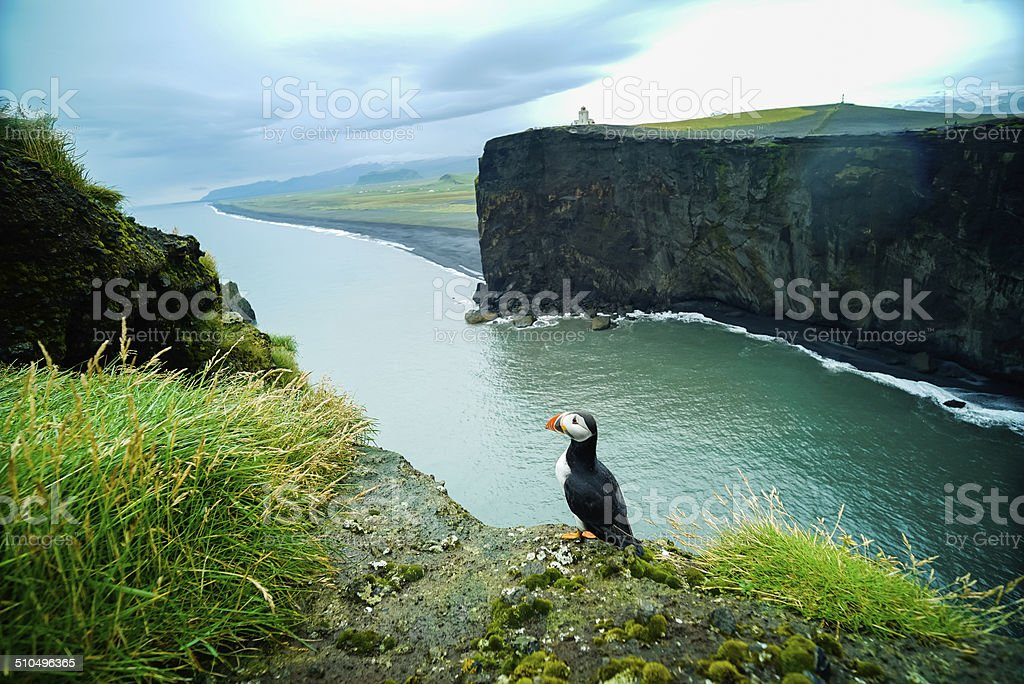 Super wide angle shot to Puffin stock photo