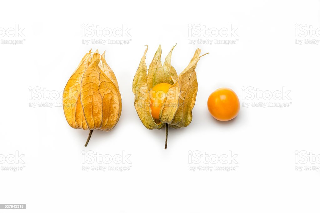 Superfood, golden berry plant in three phases (Physalis peruviana) stock photo