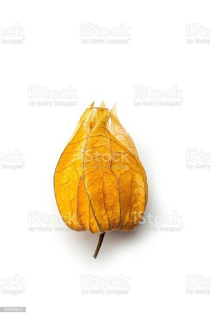 Superfood, golden berry plant  (Physalis peruviana) stock photo