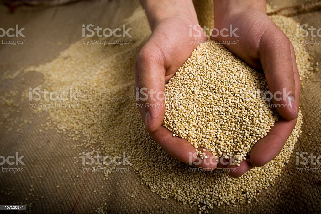 Superfood organic Quinoa whole grain in hands royalty-free stock photo