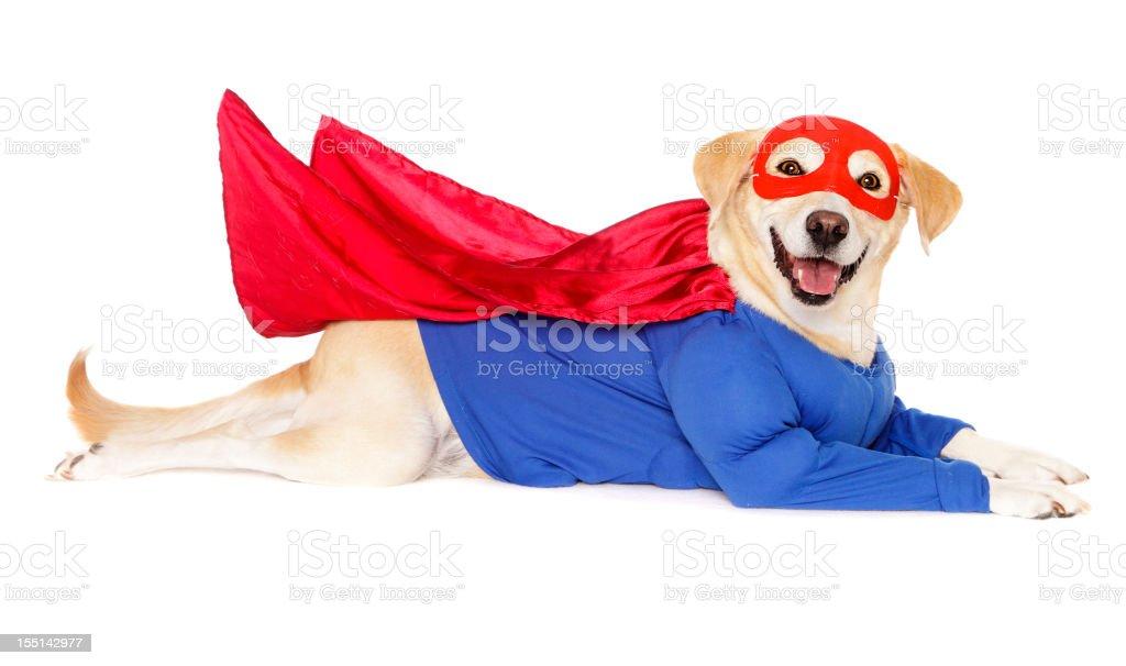 Superhero Dog stock photo