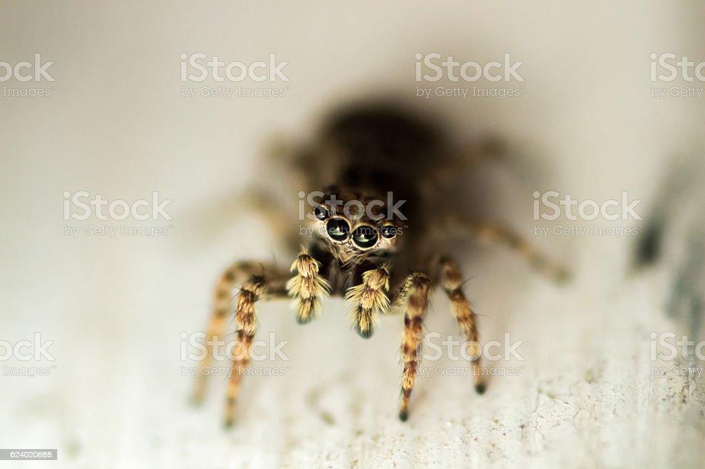 Super-macro shot of jumping spider stock photo