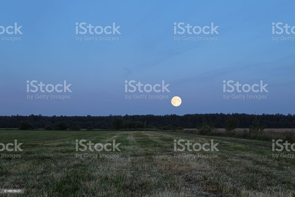 supermoon over the forest stock photo