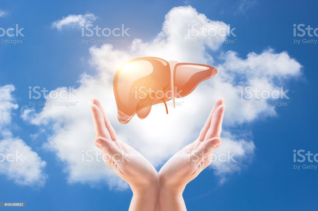 Support a healthy liver. stock photo