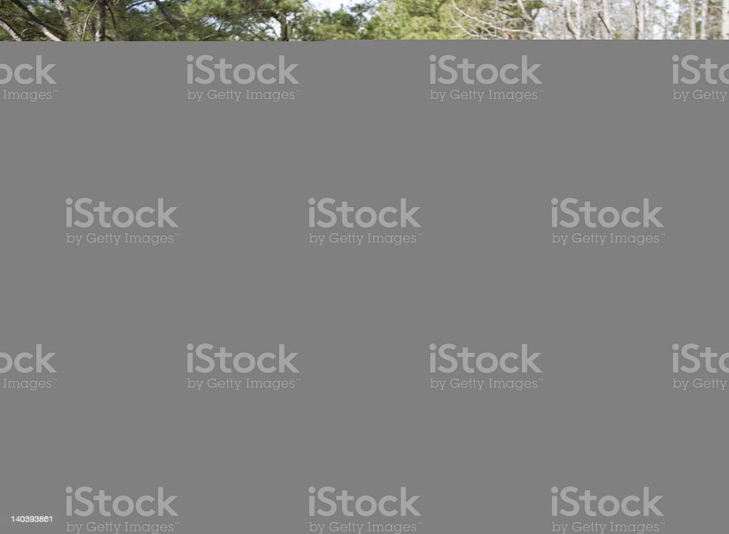 Supporting life royalty-free stock photo