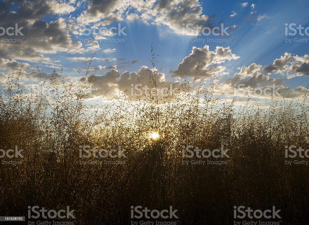 Sureal sunset royalty-free stock photo
