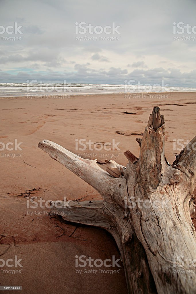Surf and driftwood royalty-free stock photo