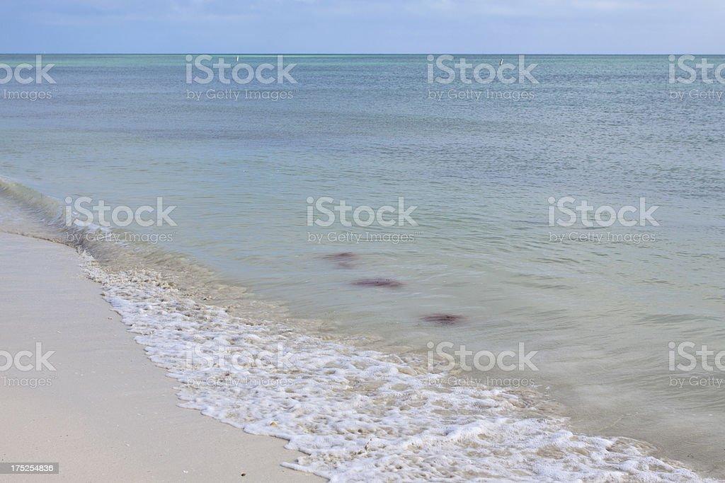 Surf royalty-free stock photo