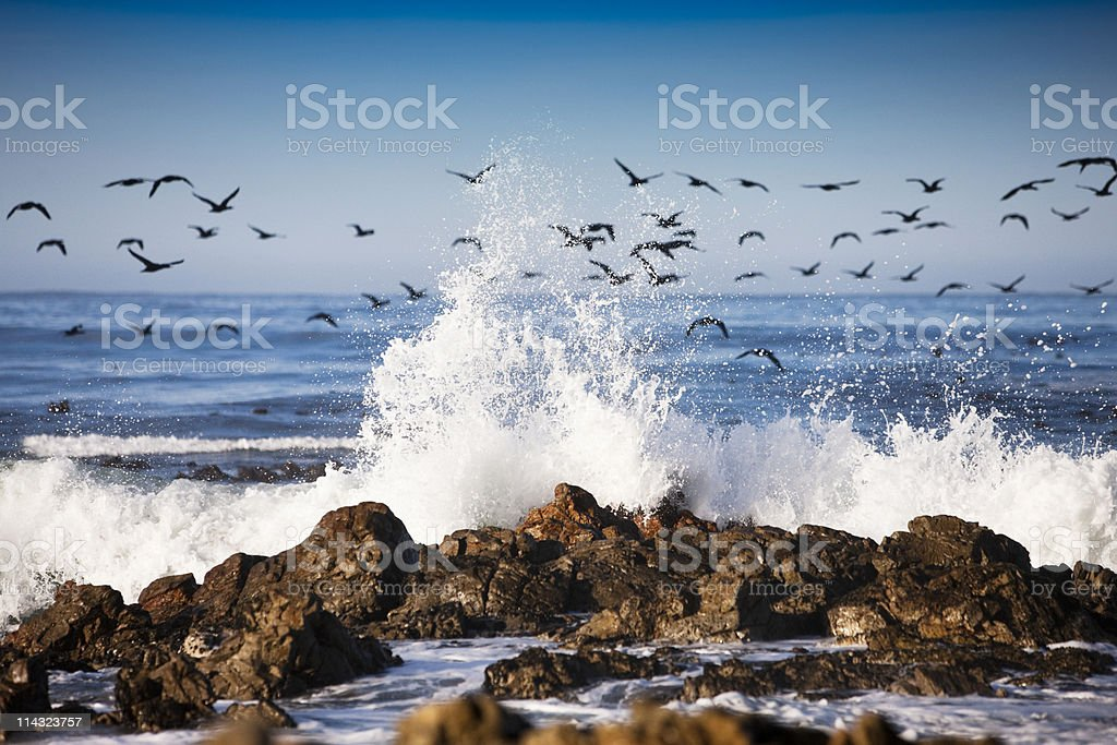Surf with migrating cormorants royalty-free stock photo