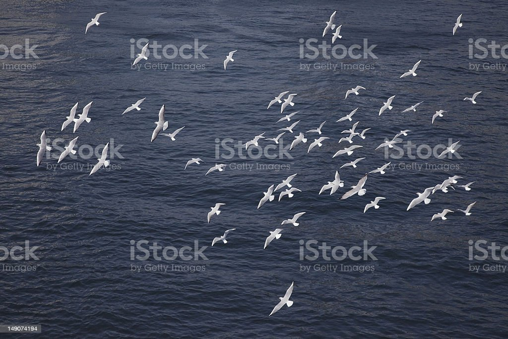 Surface of the water and sea gull stock photo