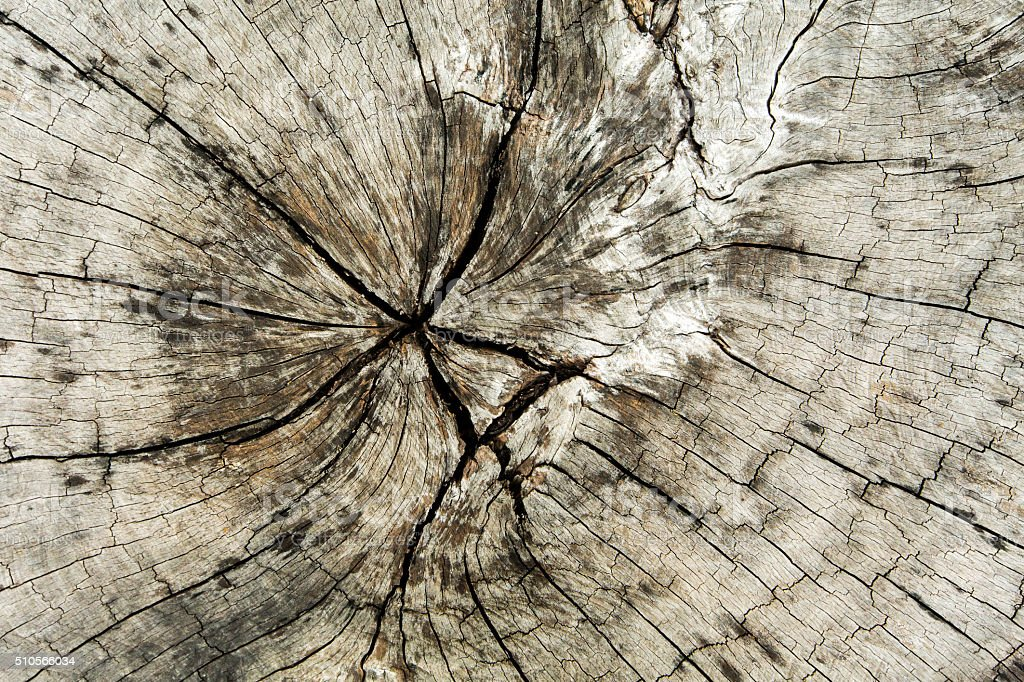 Surface of timber background,wood background. stock photo