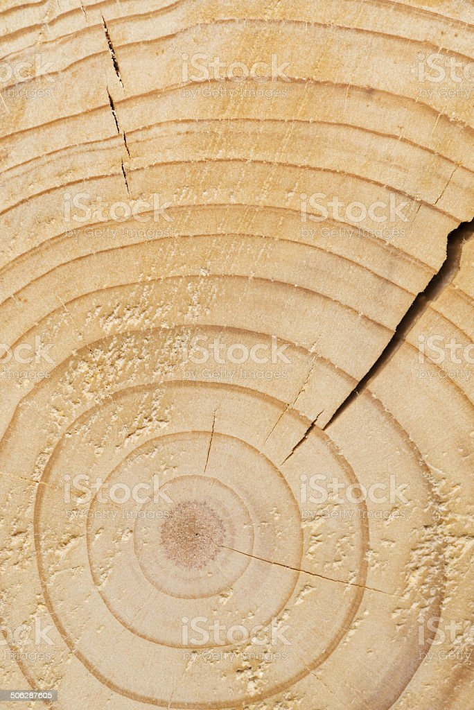 Surface of wood stock photo