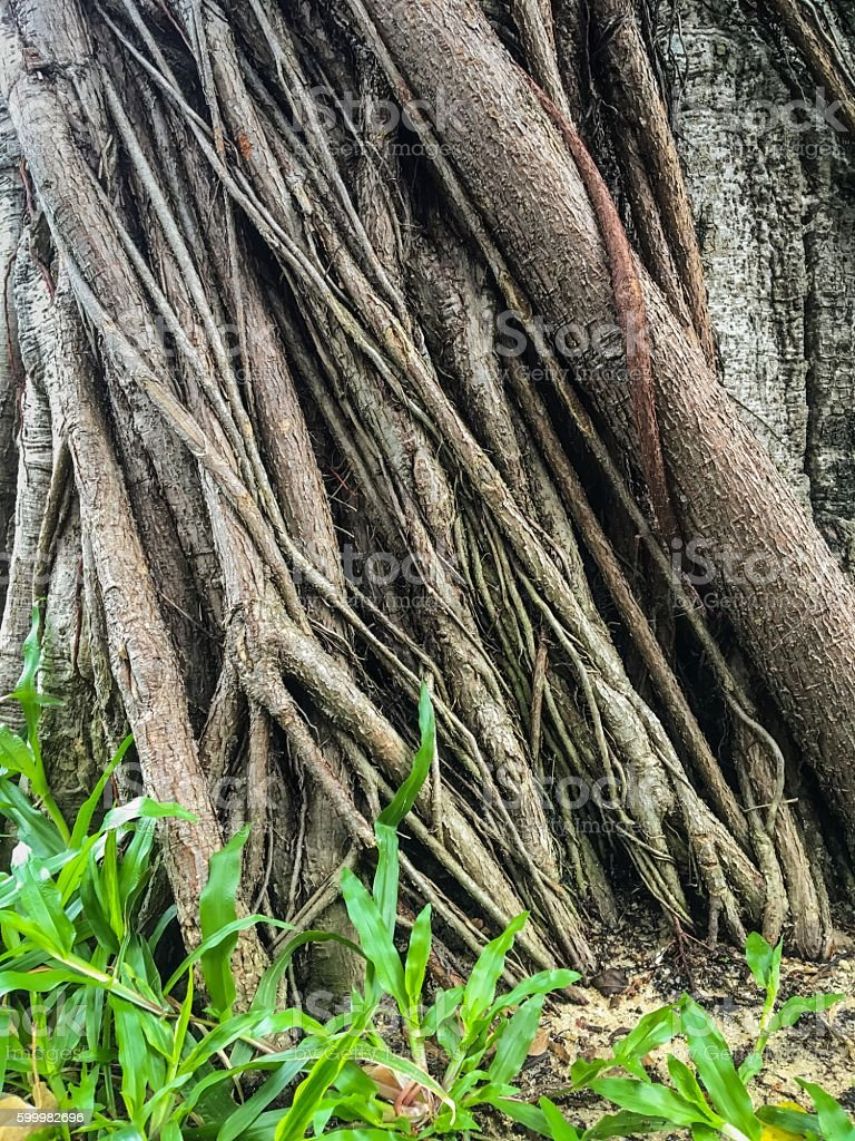 Surface trees and green grass stock photo
