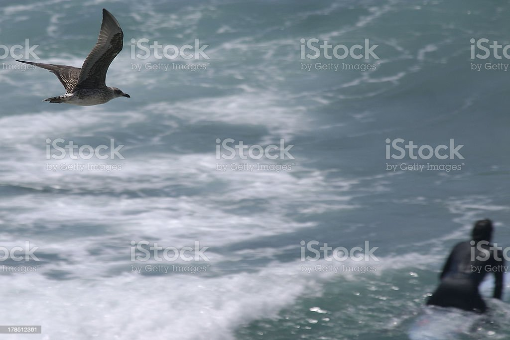 Surfer and Sea Gull stock photo