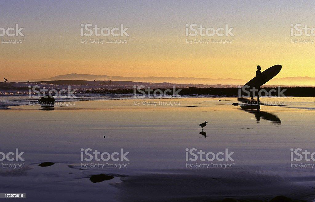 Surfer at Sunset in Santa Barbara, California royalty-free stock photo