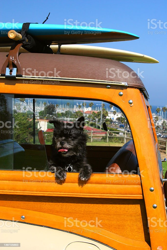 Surfer Dog stock photo