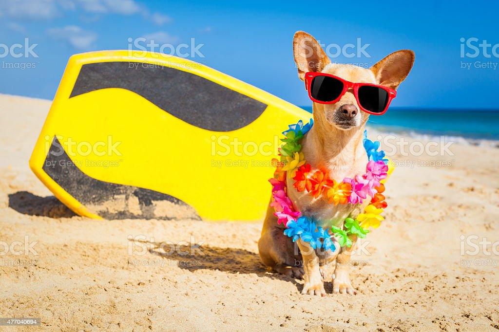 surfer dog stock photo
