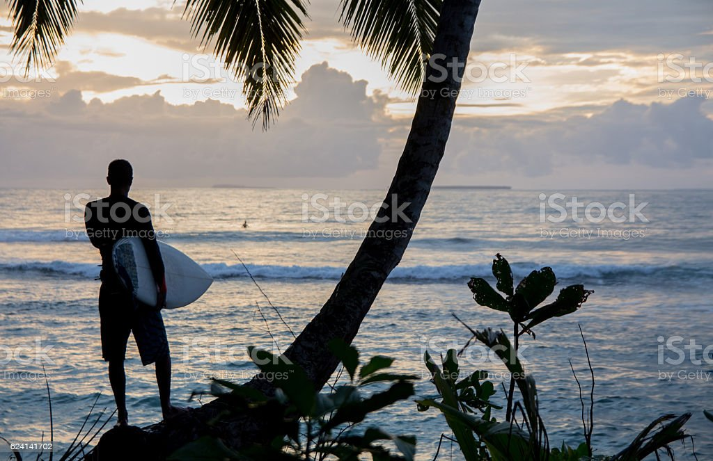 Surfer standing under palm tree watching sunset on the beach stock photo