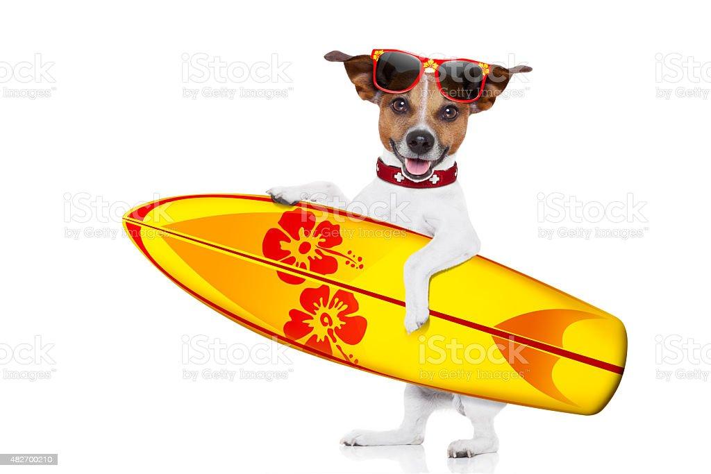 surfing dog selfie stock photo