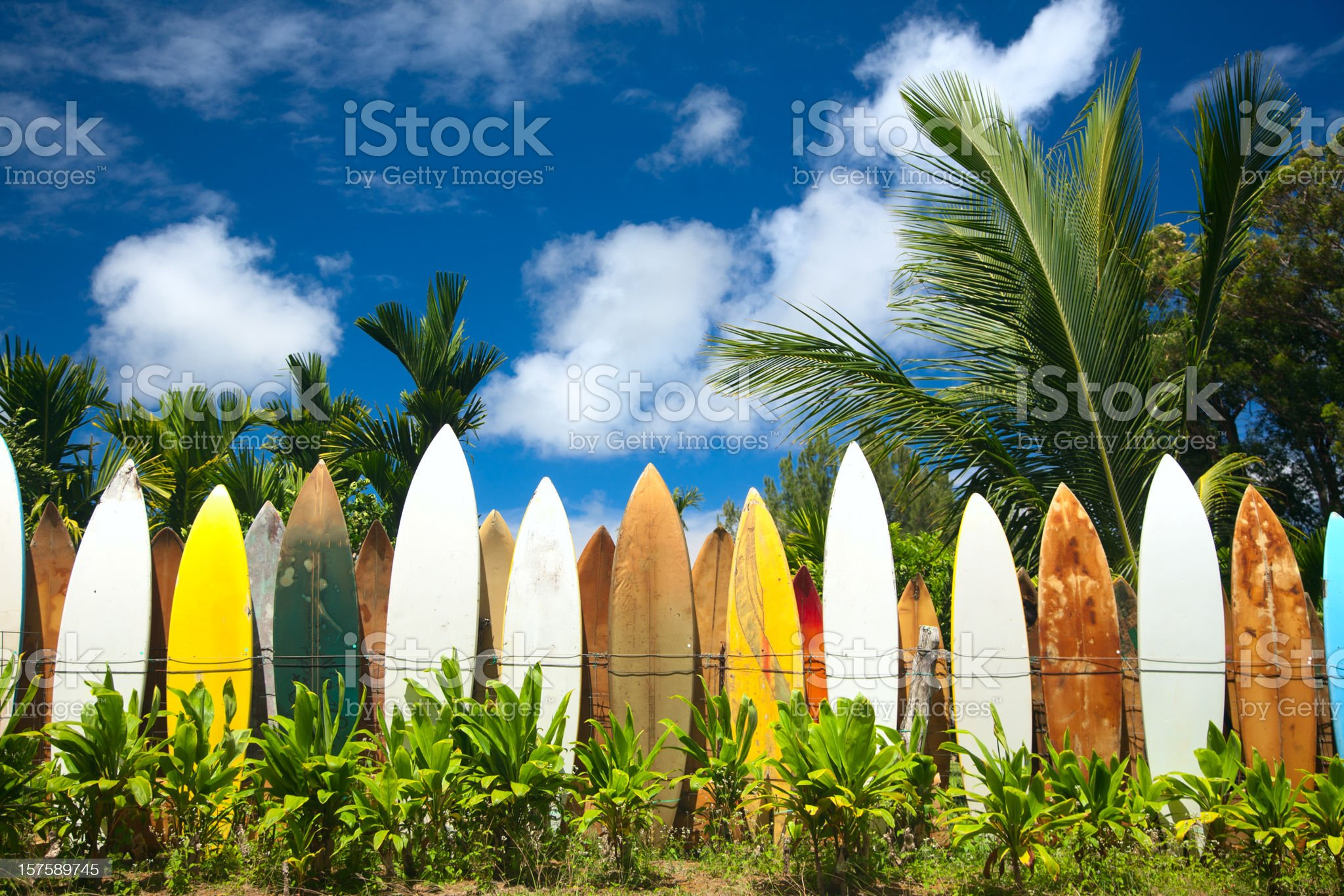 Surfing royalty-free stock photo