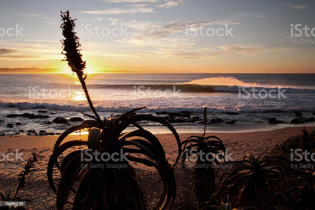 Surfing sunrise stock photo