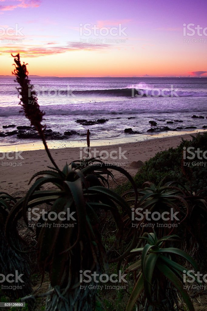 surfing wave at dawn stock photo