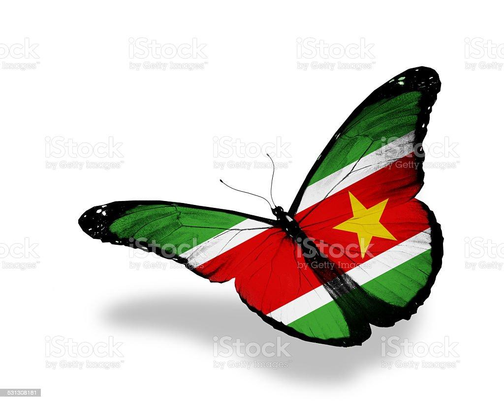 Suriname flag butterfly flying, isolated on white background stock photo