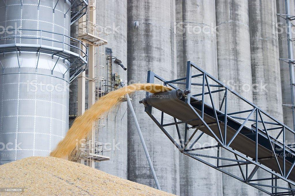surplus corn piled on the ground stock photo