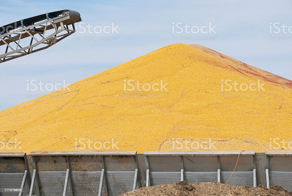 Surplus harvested corn in midwest USA royalty-free stock photo
