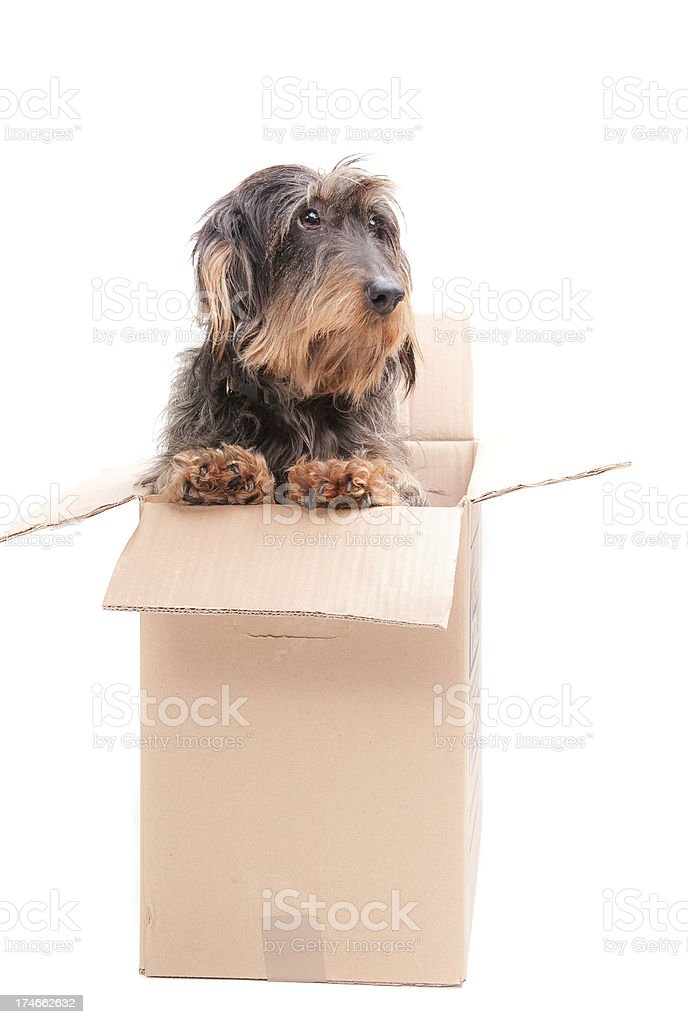 surprise gift stock photo