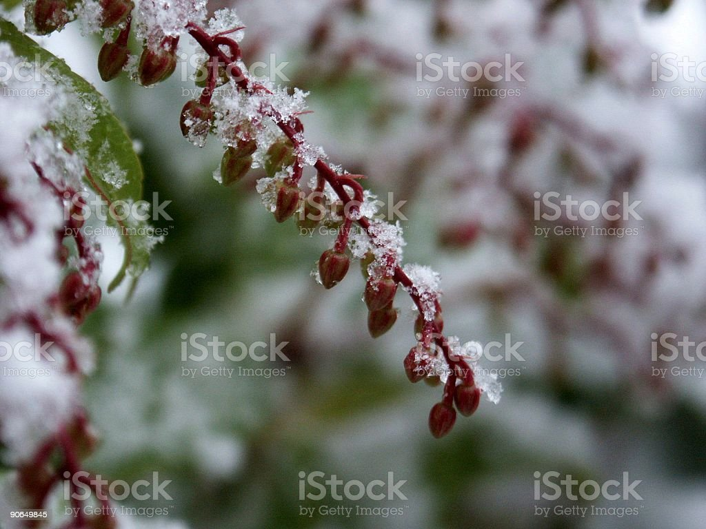 surprised by snow royalty-free stock photo