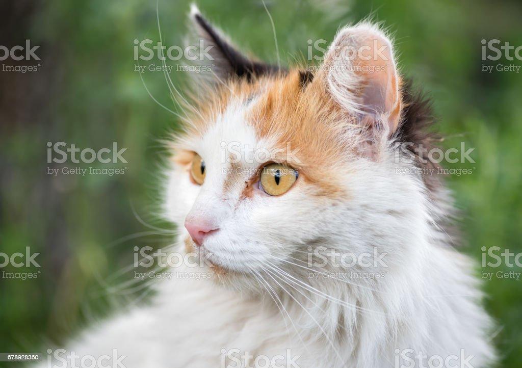 surprised cat portrait stock photo