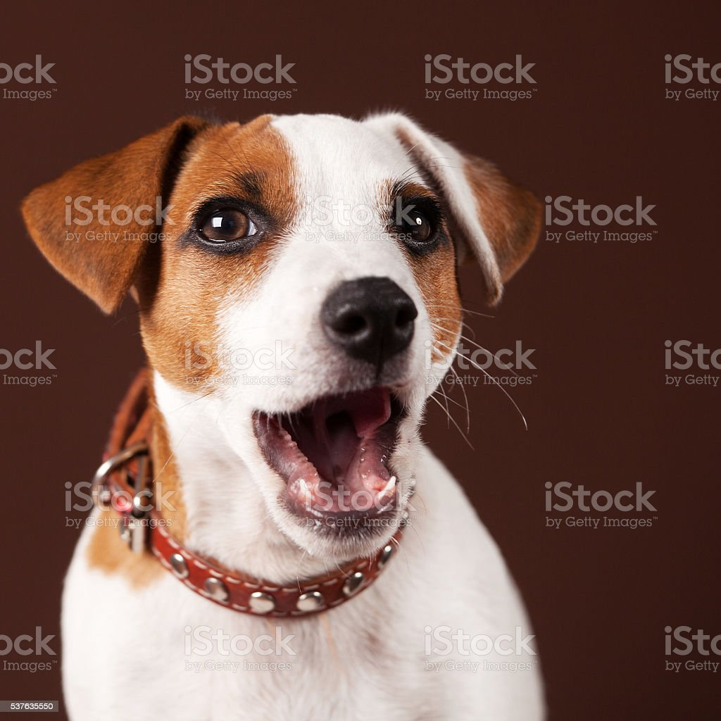 Surprised dog stock photo