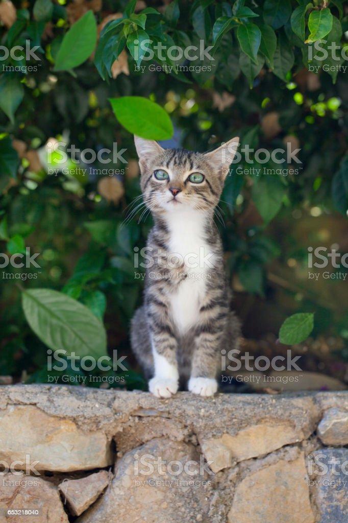 Surprised Kitten stock photo