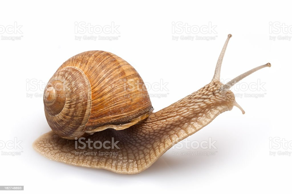 Surprised Snail  Look side royalty-free stock photo