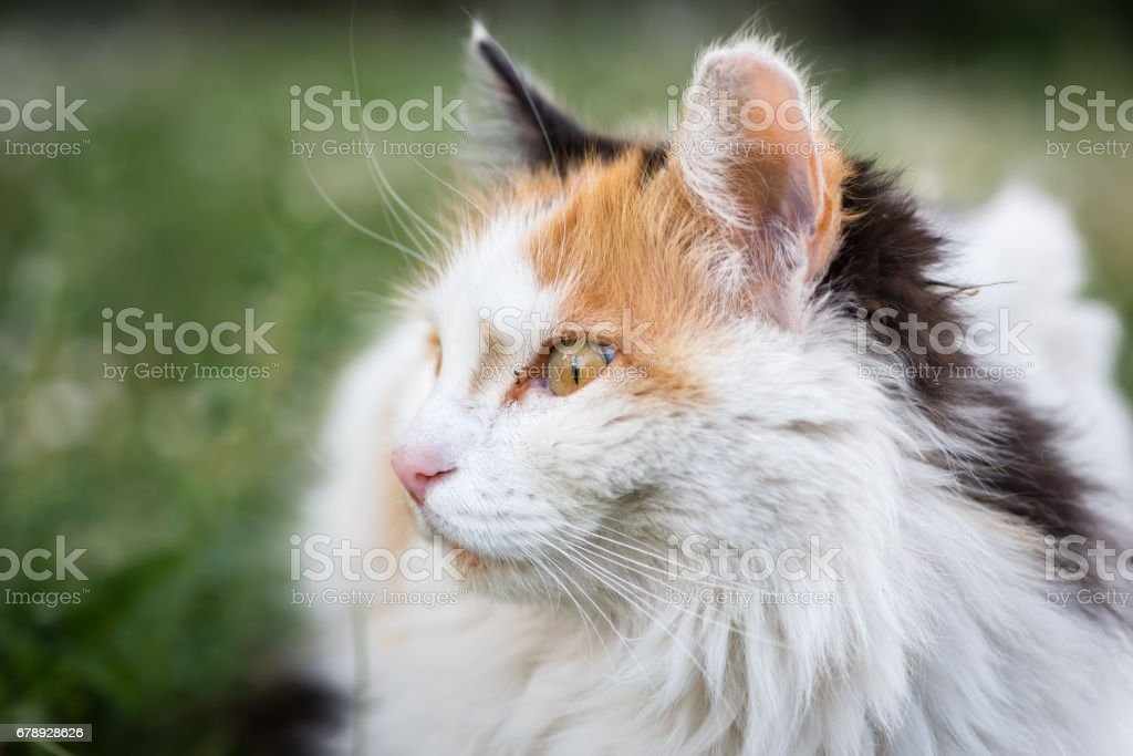 Portrait of a street cat, which looks like it is surprised. Photo is...