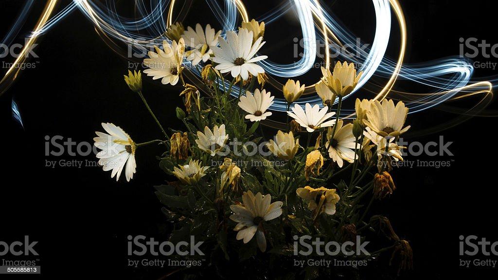 surreal dekroativ flower with light pattern. stock photo