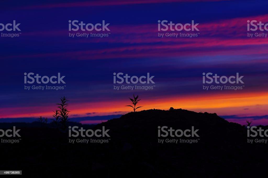 dramatic sunset back lit grass
