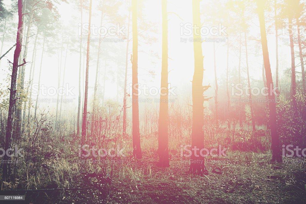 Surreal woods stock photo