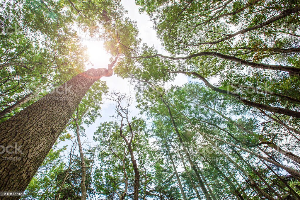Surrounded by Tall Trees, Spring season stock photo