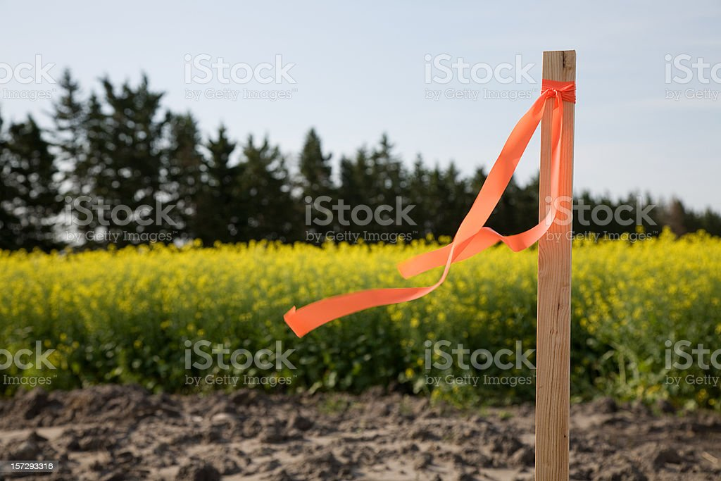 Survey Stake stock photo