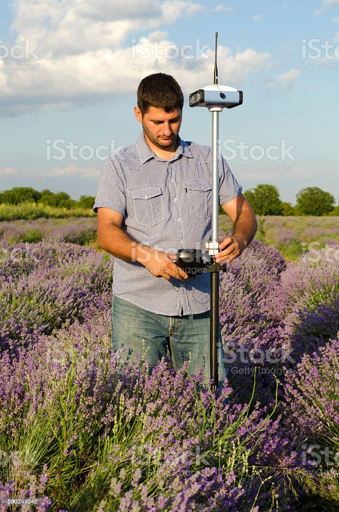 Surveyor adjusting its instrument in a field of lavender stock photo