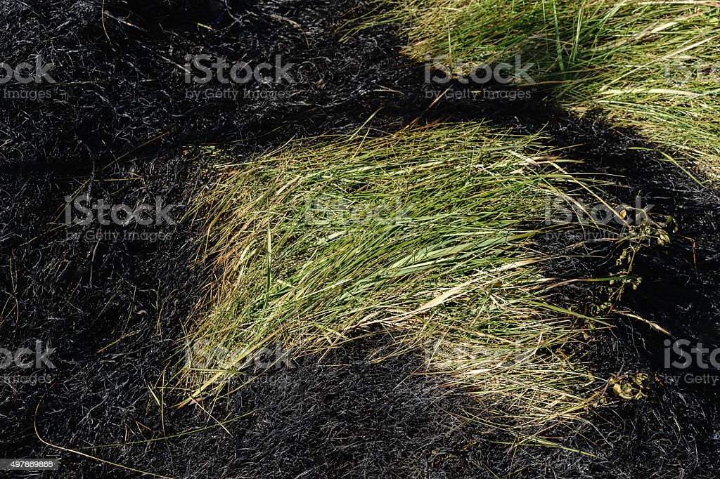 Survival of the greenest stock photo