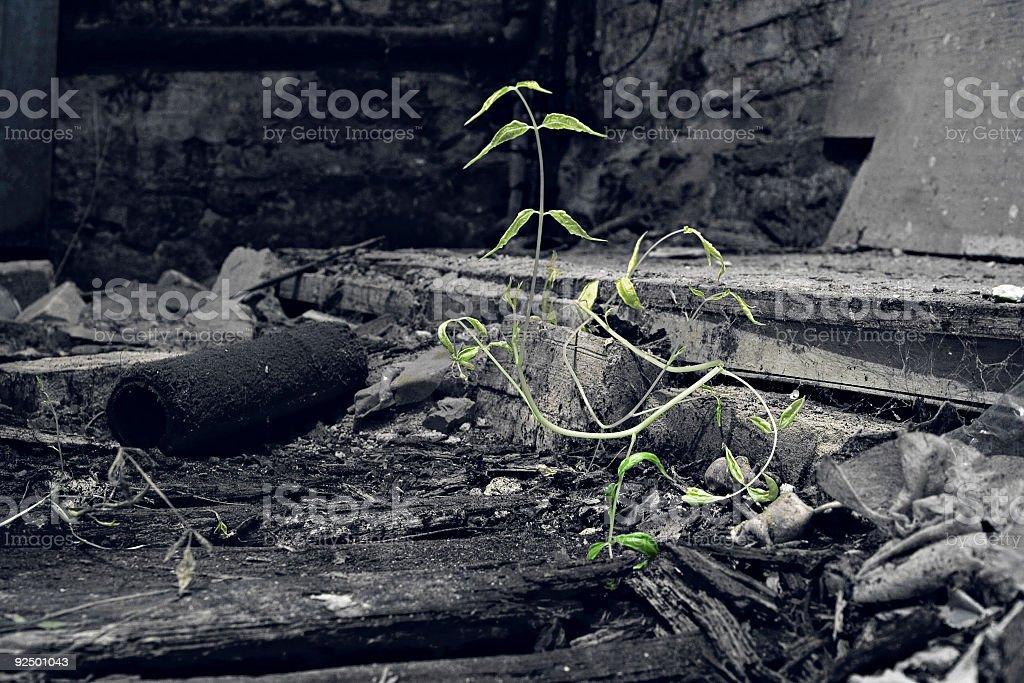 Survival royalty-free stock photo