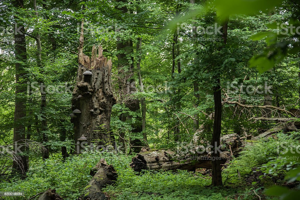 Suserup Forest in Denmark stock photo