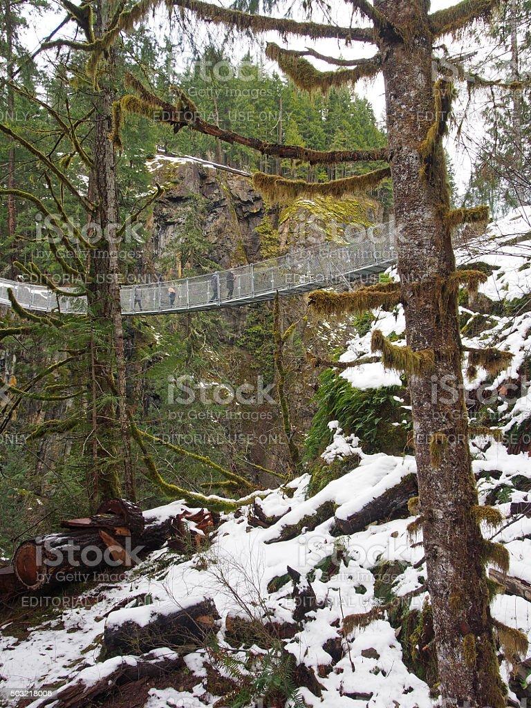 Suspension Bridge In Campbell River, British Columbia, Canada Royaltyfree  Stock Photo