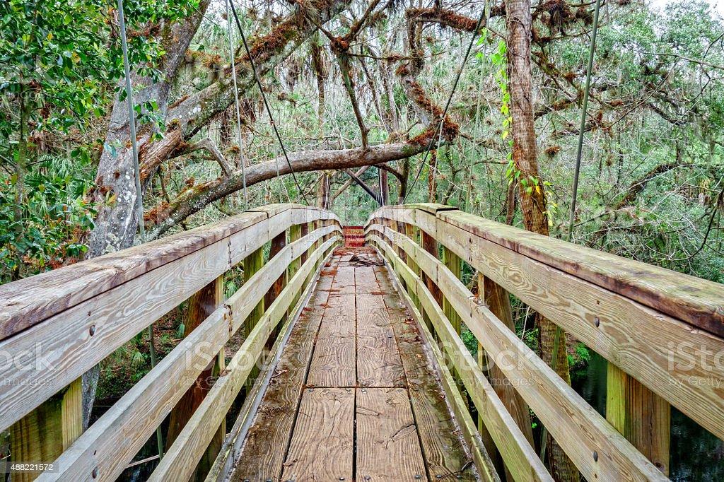 Suspension Bridge in Forest Hillsborough River State Park Florida stock photo